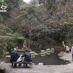 台北(Taipei)陽明山 陽明公園賞櫻花