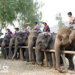 清邁(Chiang Mai)最推薦的旅遊行程-Patara 大象農場