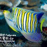 大溪地旅遊(Tahiti Travel)法卡拉瓦環礁潛水介紹(Fakarava Scuba Diving)