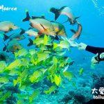法屬玻里尼西亞 / 大溪地旅遊資訊(French Polynesia / Tahiti Travel Information)