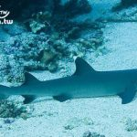 大溪地旅遊(Tahiti Travel) 大溪地潛水介紹(Tahiti Scuba Diving)