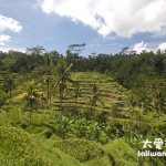 峇里島/巴里島旅遊自由行(Bali Travel)景點 德哥拉朗梯田下午茶 Tegallalang Padi