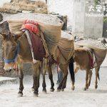 減肥來印度就對了 8 註定去不了聖城Varanasi