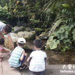 新加坡親子遊推薦景點 新加坡動物園Singapore Zoo