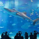 沖繩最推薦的景點 沖繩美麗海水族館