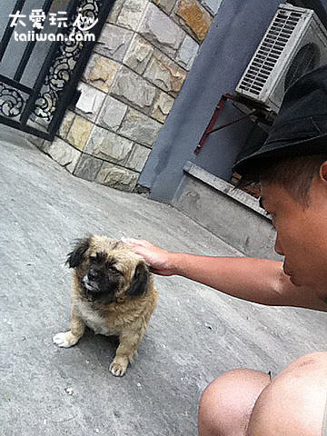 我的狗朋友
