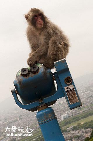 嵐山的猴子