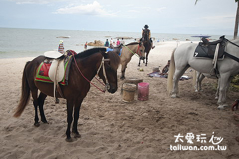 海灘上的一群馬