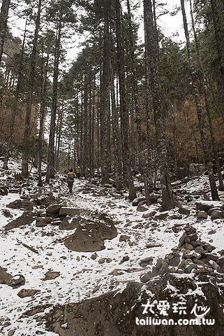 深不見底的森林及陡峭的山坡