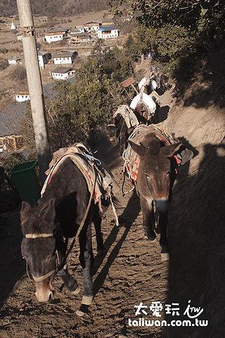 驢子也出發了