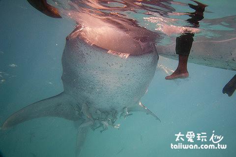 鯨鯊鯨鯊我愛你