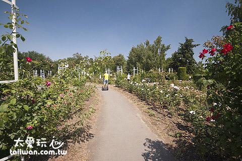 繞到玫瑰園去挑戰過彎道轉圈圈