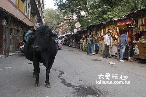 牛是神獸,地位非常崇高