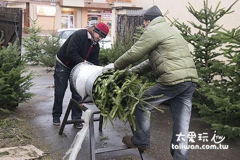 店家用超級大喇叭把樹給打包