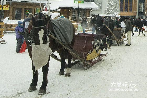 街上的傳統馬車