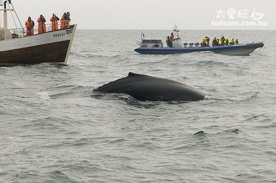 近距離看鯨魚