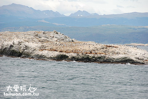 海獅與海鳥島