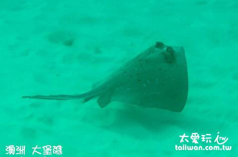 大堡礁海底世界 - 魟魚