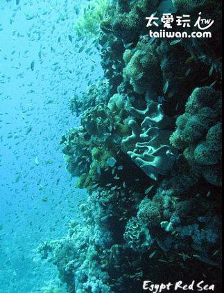 Naama Bay 潛水