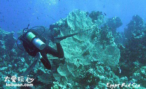 巨大的珊瑚
