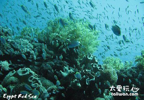 繽紛的紅海水底世界