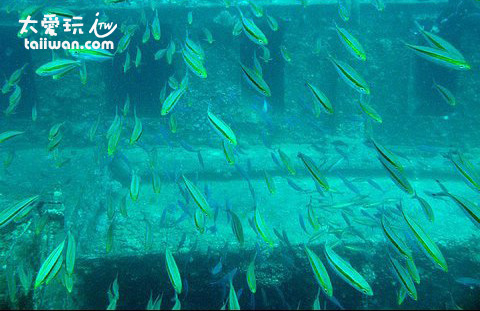 魚兒們的海洋樂園