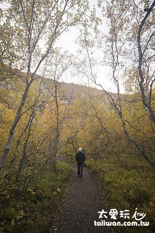 阿斯匹吉峽谷Ásbyrgi秋天的景色