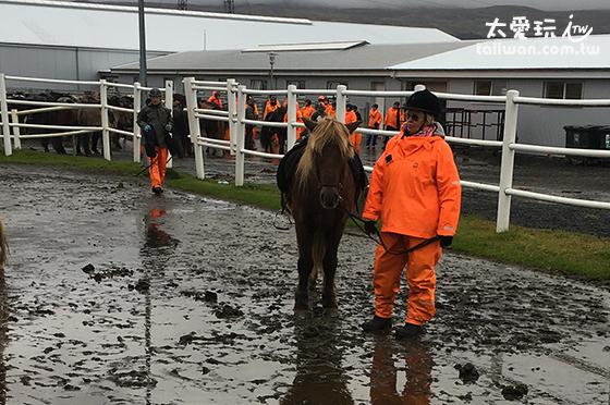 冰島馬很小一隻吧!