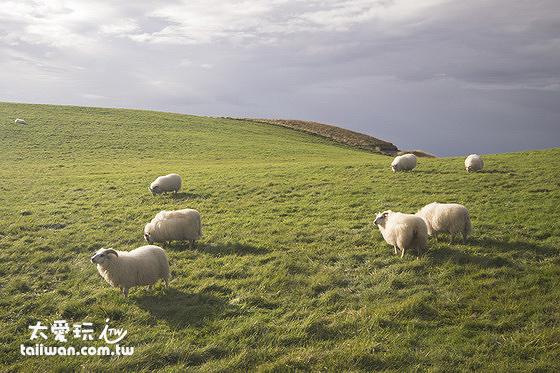 Skútustaðagígar偽火山口的小肥羊