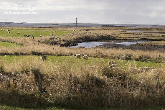 斯諾拉斯塔迪爾農家樂Snorrastadir Farm Holiday 的羊群