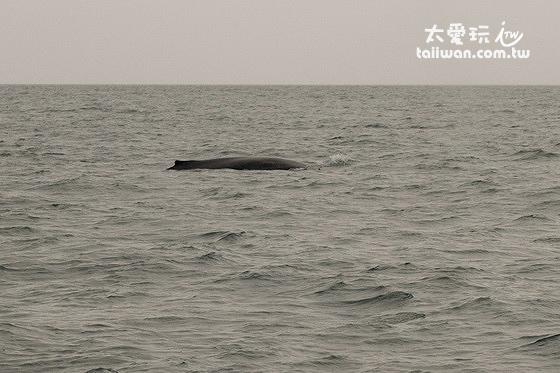 看到鯨魚了!!!