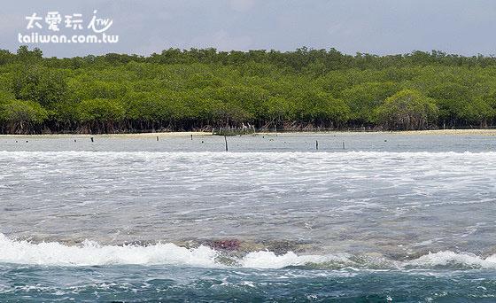 大蓝梦岛的东北边都是红树林