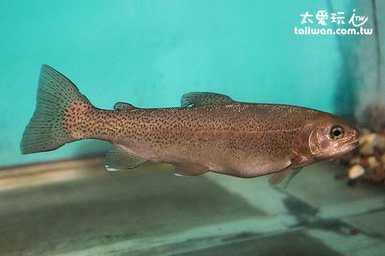 濕原內的魚類展示