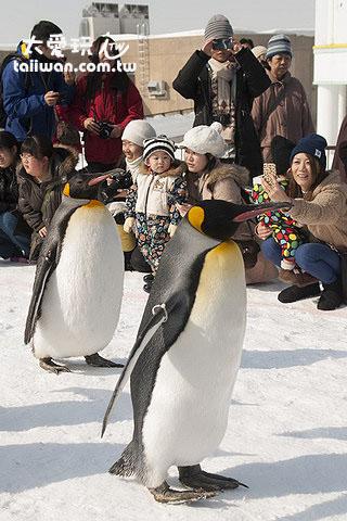企鹅就在你眼前