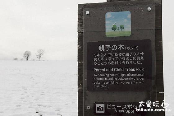 美瑛景點 - 親子之木