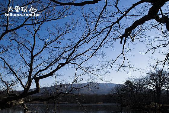 大沼公園枯樹
