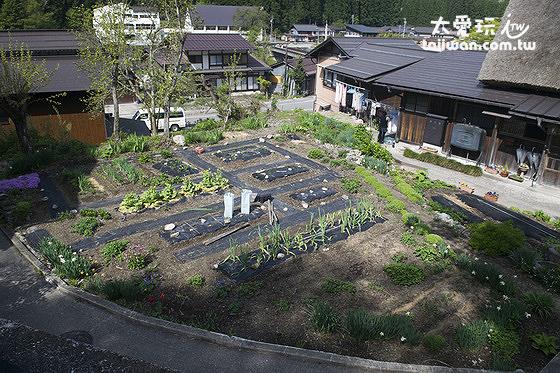 大田屋前的菜園