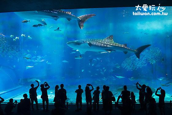 沖繩美麗海水族館推薦必去