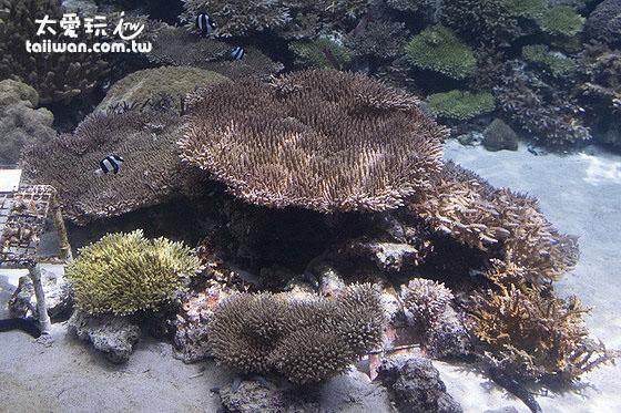珊瑚礁鱼类