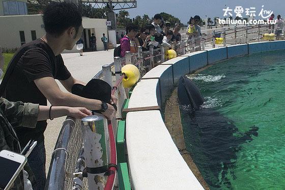 海豚剧场赏海豚