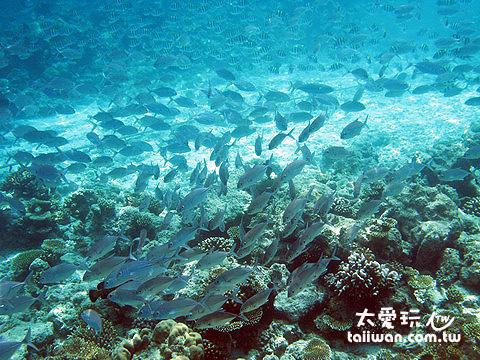 班度士島浮潛