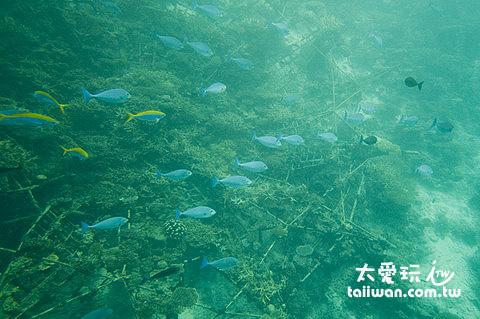 電子珊瑚礁