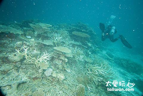 曼德芙島Medhufushi Island Resort的海底世界