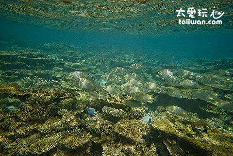 馬爾地夫浮潛水下美景