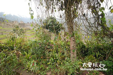 城內有若干處種植各種民生必須用植物,如 Coca( 預防高山症植物 )