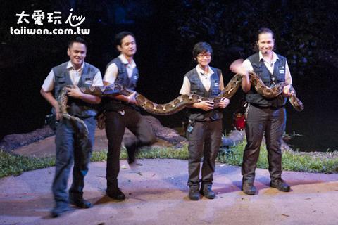 新加坡夜間動物園大蟒蛇!