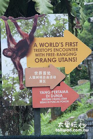 世界上首處人猿自由活動展區