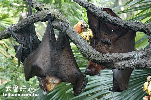 蝙蝠就在眼前