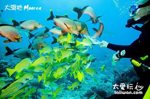 大溪地擁有豐富的海底生物