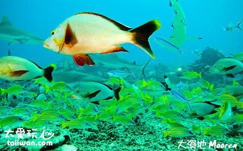 茉莉亞島潛水